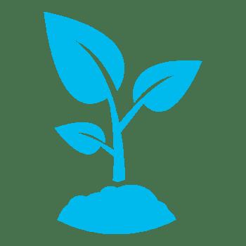 Blue seedling